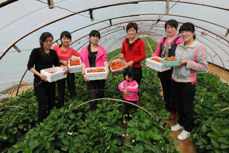 杨城寨草莓采摘一日游