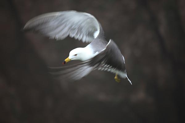 海之精灵-姜波