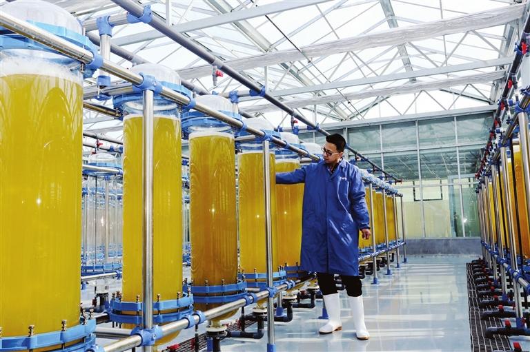 寻山集团在国内率先实施三角褐指藻工厂化养殖